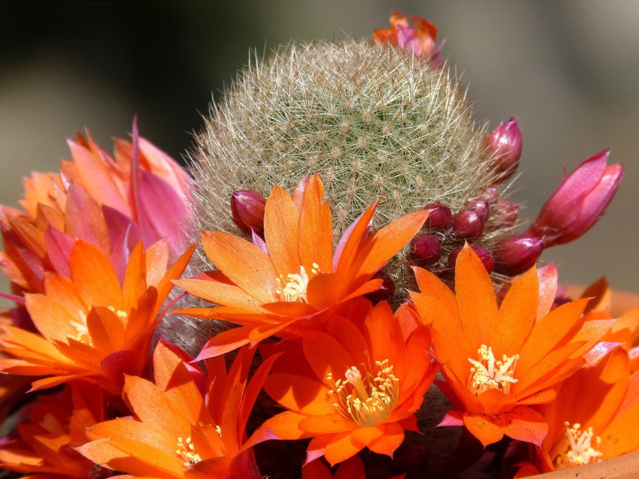 Kaktusz főkép